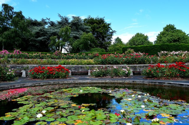 My Monet Moment... OK... it just gives me that feeling! The gardens at the Irish War Memorial, Dublin, Ireland