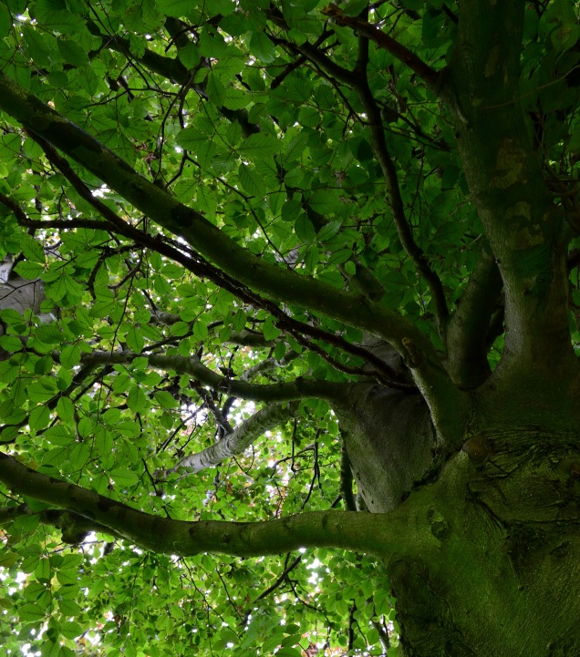 The green peace... looking up into heaven!