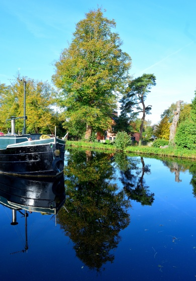 Trees and travel - you choose!! Taken at the 12th Lock Harbour, Royal Canal