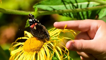 Little finger... the WWW posing with a Red Admiral