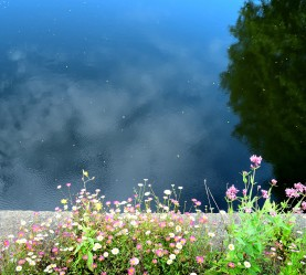 Reflections of summer? No, more like memories of Liffey summer waters...