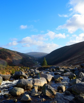 A look down the Wicklow Gap... yes, that lonely pine acted like a magnet... attracting me across the uneven rocks... jut for this happy snap!