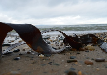 Kelp fronds on the beach... photography fun!