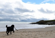 Hey humans... don't go... I wanna play!! Kilpatrick Beach, Co Wexford, Ireland
