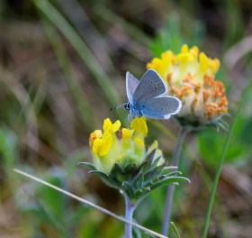 Small Blue... yes, we got the shots!