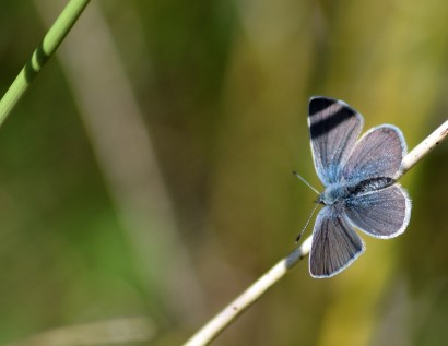 Small Blue... yes, we got the shots! Even some art for fun!