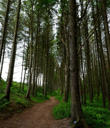The woodland north of Courtown ... the way I remembered the path near the sea... you could hear but not see the sea...