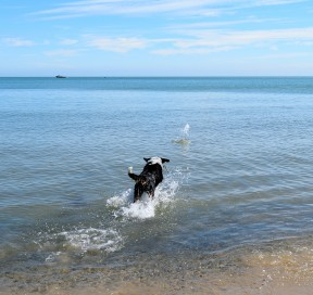 Pepsi chasing the ball... summer in Arklow, Co Wicklow, Ireland. Bliss!!