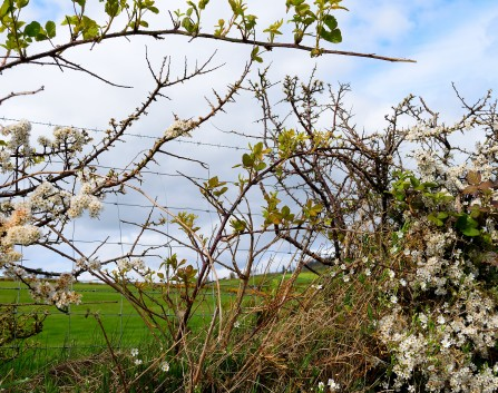 Spring promise... there's life in the hedgerow!