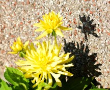 Yellow... totally happy three! Black and yellow.... light and shadow!