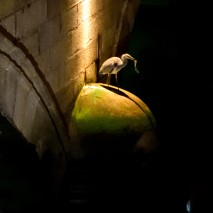 Heron trying to get the better of it's catch, at 23h20 at night! These city birds... they sure know how to live it up!