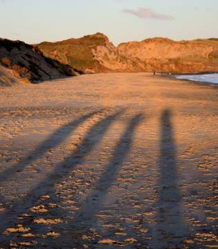 Winter sun... long shadows casts. Somewhere in Co Wexford, Ireland...