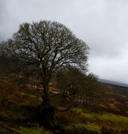 Winter in the Sally Gap, Wicklow Mountains, Co Wicklow, Ireland...