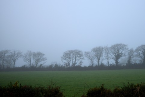 Six word Saturday = Damp winter shroud... silhouettes bare trees