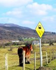 Curves - Co Donegal Style... somewhere along The Inis Eoghan... near Milltown near Dunree... I think!