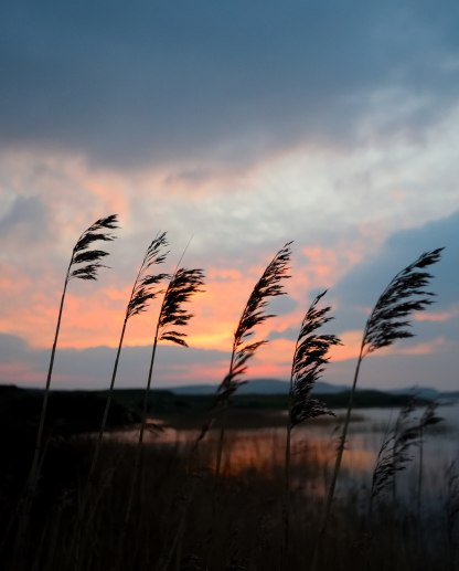 Donegal sunset splendour... 23 Fed 2018 - across the New Lake, Dunfanaghy - reeds ablowing!