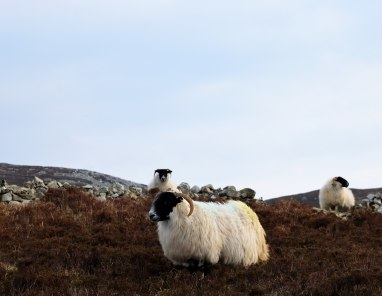 A life of leisure... on Horn Head... Dunfanaghy! Some little place!!