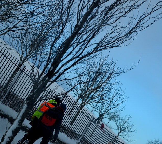 Snow and bare trees... the harsh reality of winter!