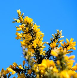 Yellow, yellow... against the sky... the manifestation of spring's awakening!