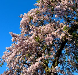 A thing of beauty! In full blossom!