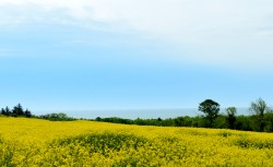 A summer field... outside Arklow, Co Wicklow... hope you don't suffer hay-fever!!