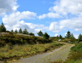 The road - Summer solstice in the Wicklow Mountains - green, many shades. Co Wicklow, Ireland, 2018.