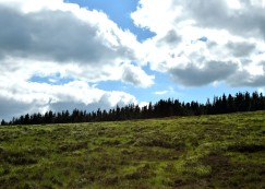 Summer solstice in the Wicklow Mountains - green, many shades. Co Wicklow, Ireland, 2018. Treeline...