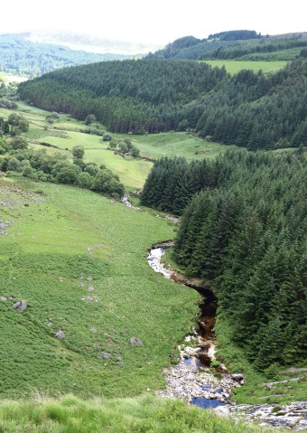 Summer solstice in the Wicklow Mountains - green, many shades. Co Wicklow, Ireland, 2018. The valley