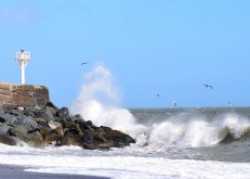 The Arklow Breakwater... the waves breaking on the rocks... scattering the birds...
