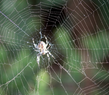 Spider, spider in the web... cool house you have!!