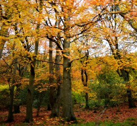 Glen of the Downs autumn! Stunning!