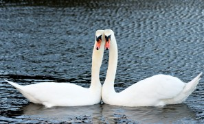 On Arklow Pond... love is!