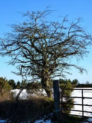 I'd also lock that tree safely away if it was mine! 01 Fed 2019 - in the Avoca area, Co Wicklow, Ireland!!