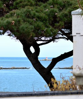 Y there? A pine tree spotted in Dalkey - The views are just great!