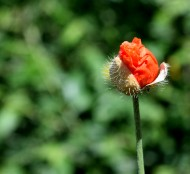 New life in the making... red dot in a green landscape...
