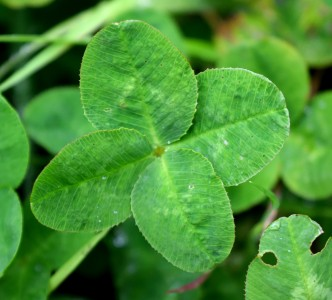 The luck of the Irish - only in Ireland??